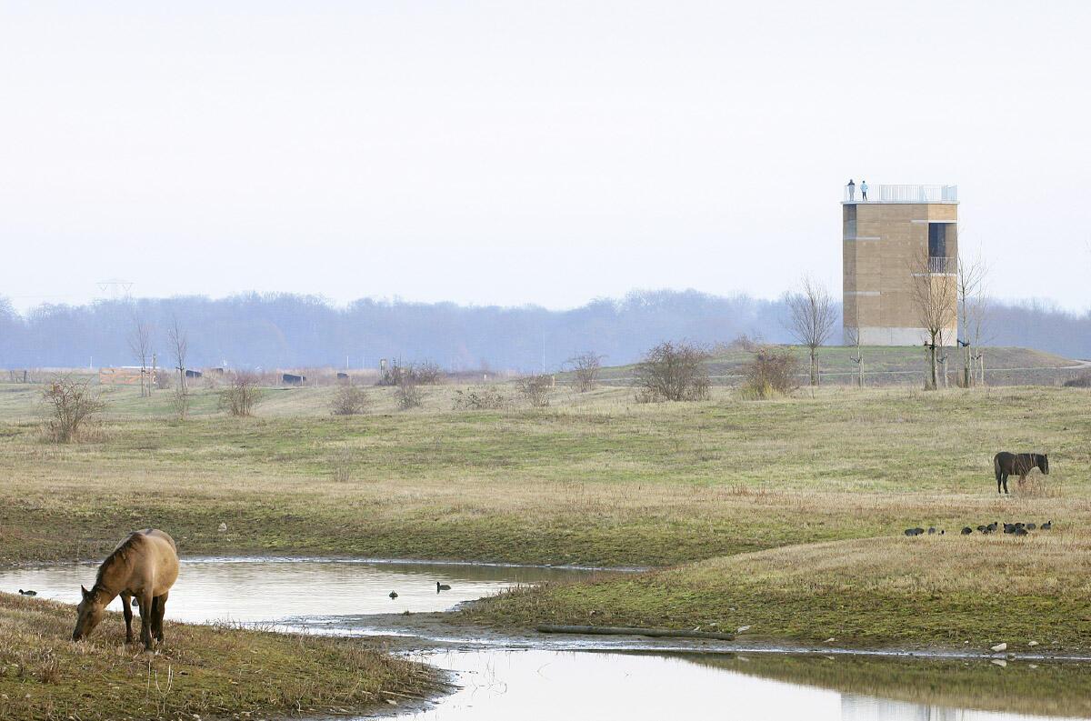 Auf einer leichten Anhöhe trotzt der Aussichtsturm den winterlichen Fluten der Maas. Die sichtbaren Kiesel im vor Ort gestampften Lehm wie auch im sandgestrahlten Beton verweisen auf die alte Nutzung des Gebiets zum Kiesabbau.  Bild: Filip Dujardin