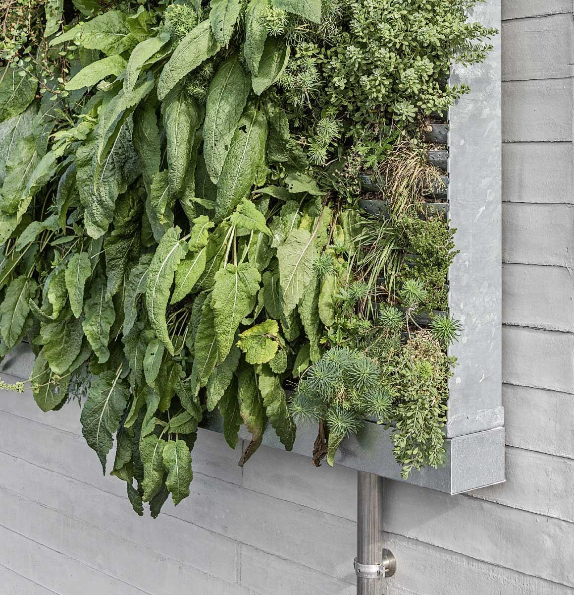 Bei Hors-sol-Systemen wachsen Pflanzen aus modularen oder flächigen Wandelementen, wie hier aus Metallkassetten mit integrierter Bewässerung. Bild: Johannes Marburg