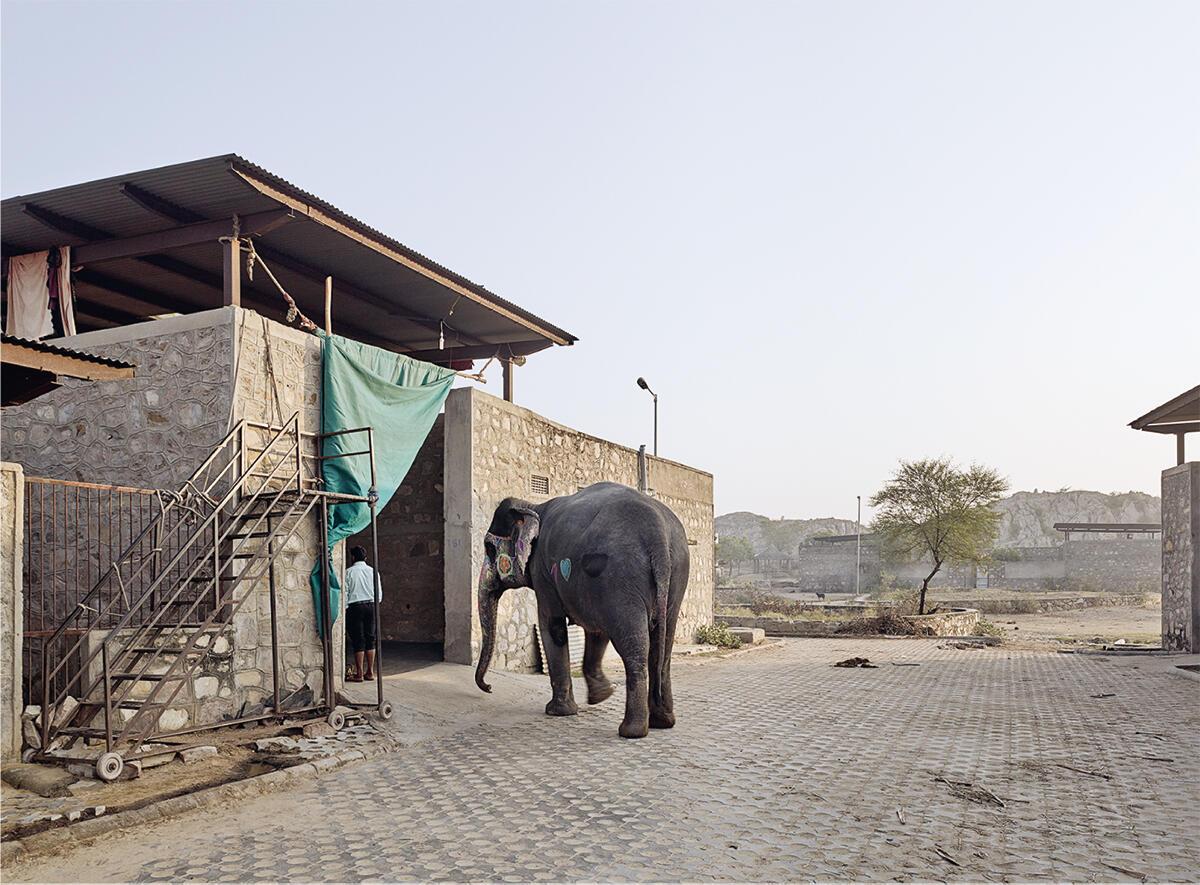 Der Eingang in den Stall in Hathi Gaon, dem Elefantendorf in der Halbwüste Rajasthans. Ein Vorhang dient als Sonnenschutz, die rollbare Treppe als Aufstieghilfe.