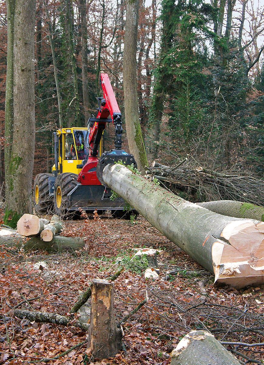 Je eher bestellt wird, umso passender kann das Holz für einen Bau ausgewählt werden. Laubholzernte in der Waadt.