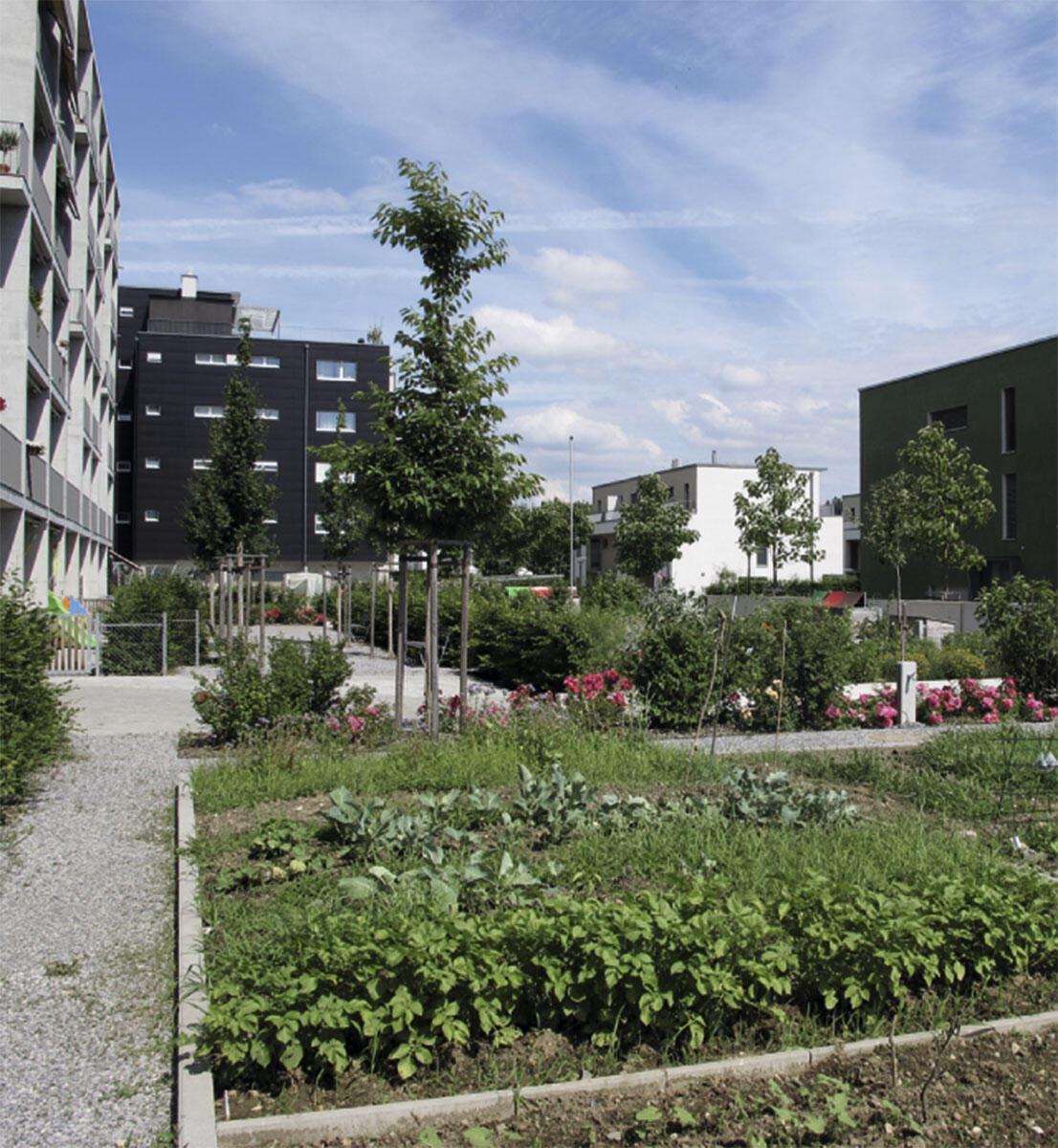 Gemüsebeete zwischen Blumen und Beerensträuchern direkt vor der Haustüre – die Bäume sind noch klein. Metron Architektur, Wohnsiedlung Futura Ecofaubourg, Schlieren, 2014.