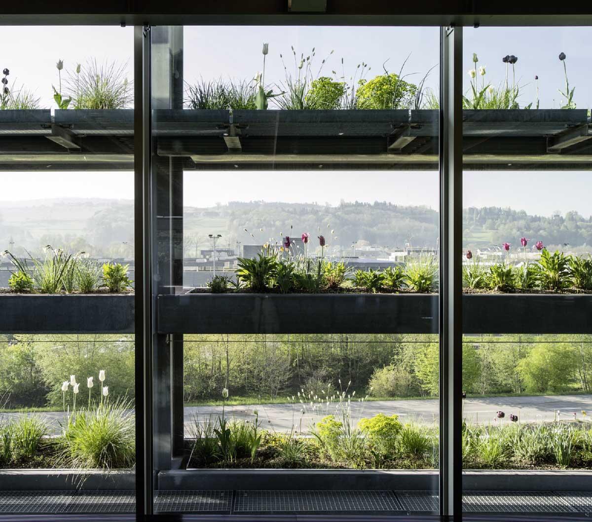 Die sorgfältig geplante Kombination der Arten ergibt eine vielfältige und stabile Pflanzengesellschaft. Pläne und Skizzen: Ganz Landschaftsarchitekten Bild: Markus Bühler