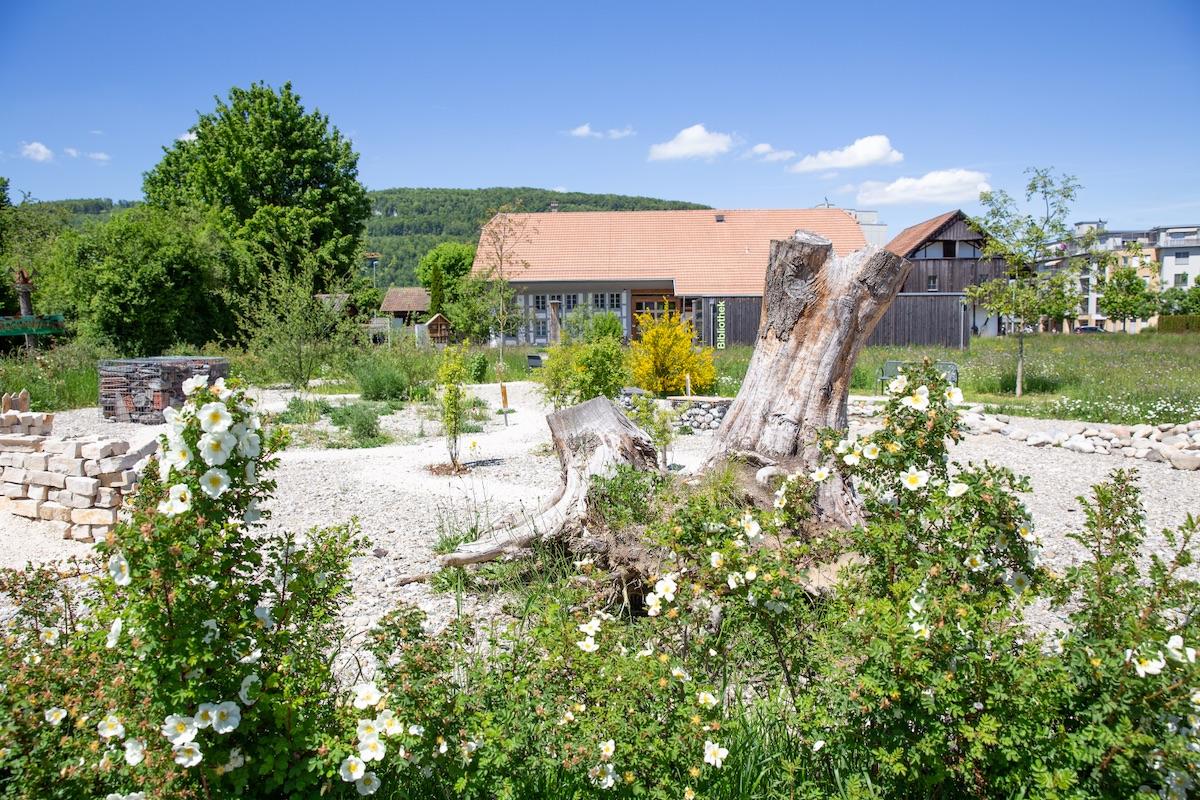 Der Naturgarten Miescherheimet in Rothrist kombinert Ruderalflächen mit Totholzbeständen, Trockenmauern mit vielfältigen Stauden und Sträuchern.